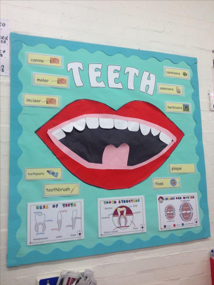 Year 3 Teeth Display 2013/2014