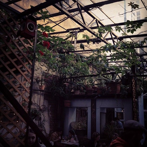 Chimera (Krakow, św.Anny) plants everywhere: on your plate, in your glass, also above your head