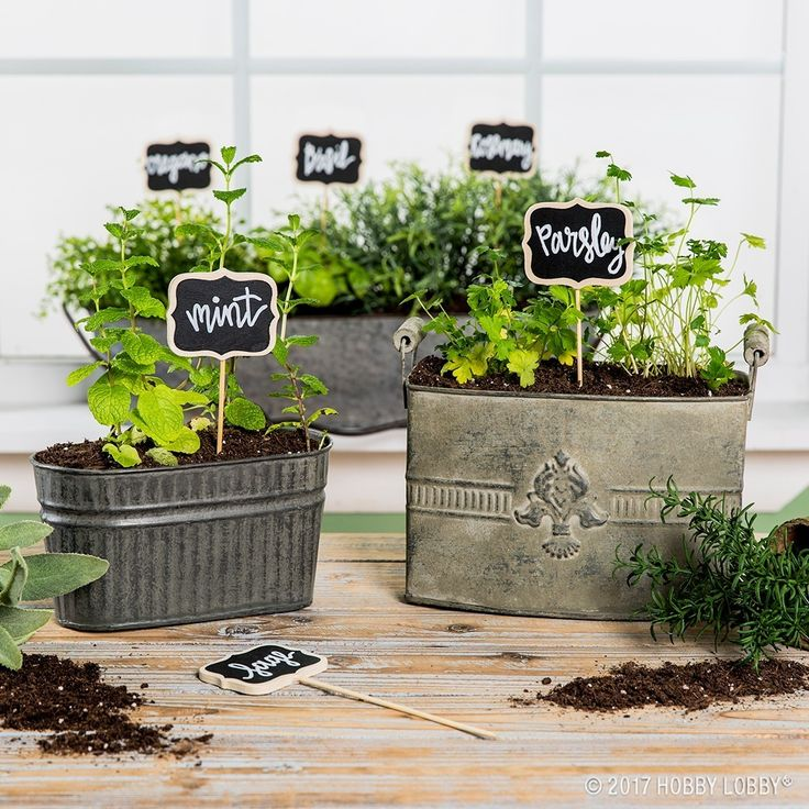 Bring Some Greenery Into Your Kitchen With Indoor Container Gardens!