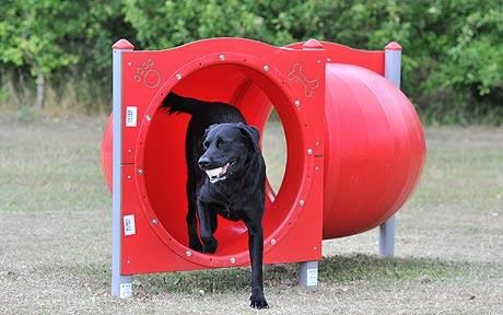 48 best images about Dog 'Play Yard' Ideas on Pinterest ...