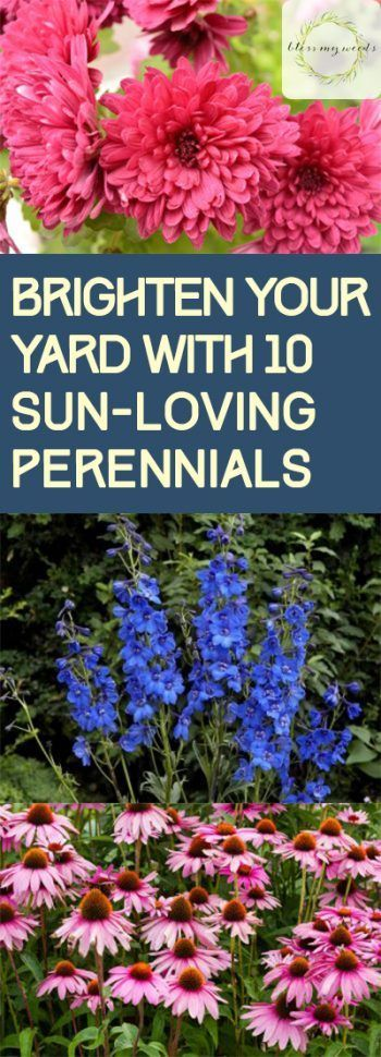 Sun Loving Perennials, Gardening, How to Garden With Perennials, Perennial Gardening TIps, Beautiful Perennials for Your Garden, Bright Perennials, Popular Gardening Pin, Easy to Grow Perennials
