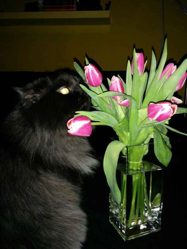My cat and the flowers.