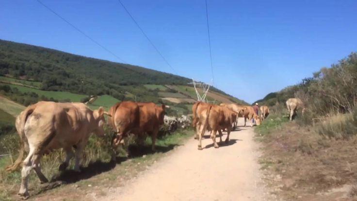 El Camino de Santiago / Margareth Brandel