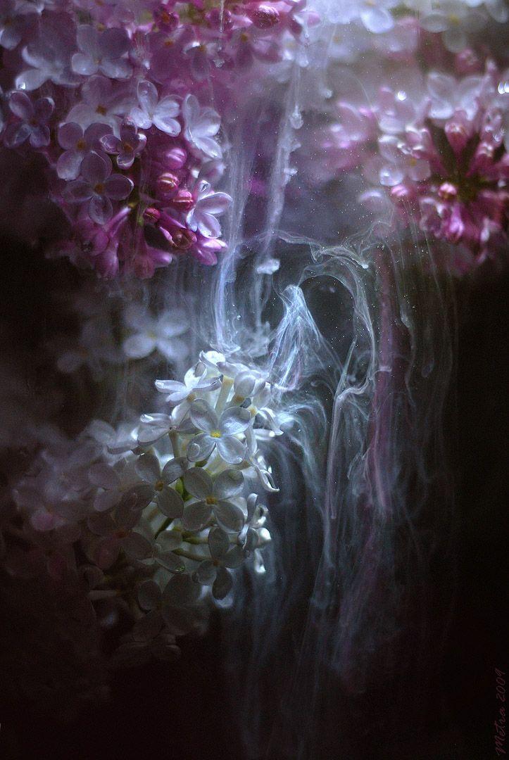 mystic white lavender and purple lilacs, dreamy, magic, dark