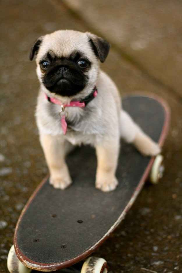 """""""TONY HAWK LEARNED EVERYTHING HE KNOWS FROM ME."""" 