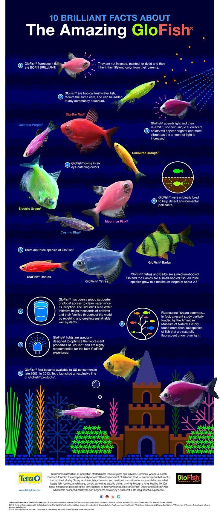 9 besten fish tanks bilder auf pinterest aquarium ideen for Japanische kampffische