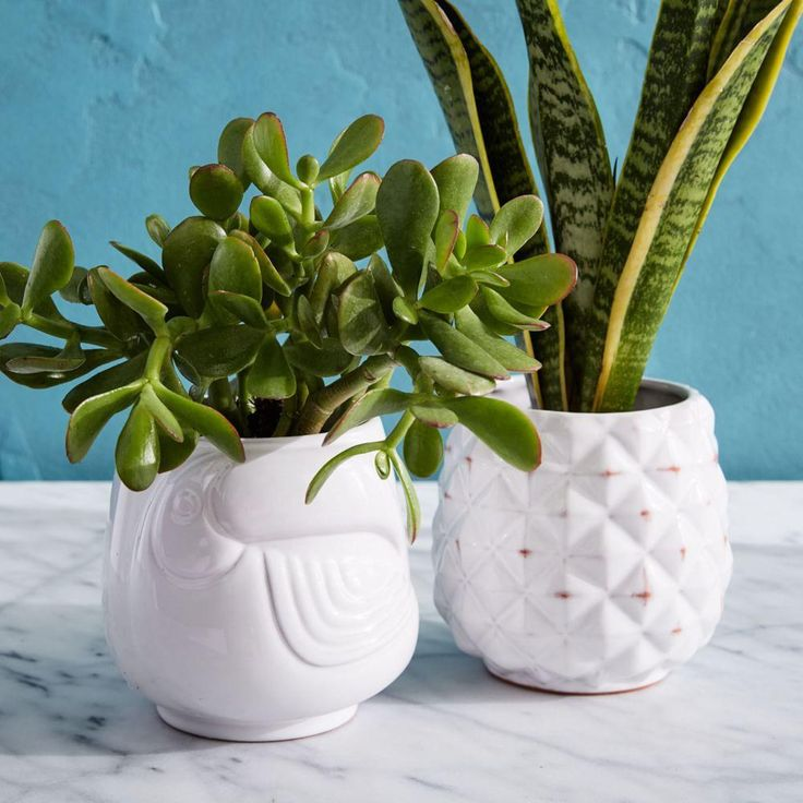 West Elm Ceramic Tropical Planters