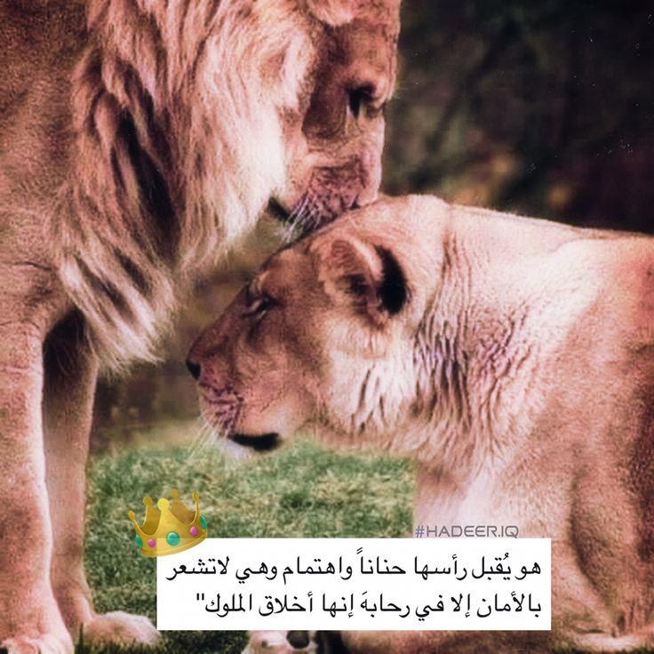 اسد ملك Lion لبوه حب In 2020 Funny Arabic Quotes Arabic Love Quotes Nature Animals