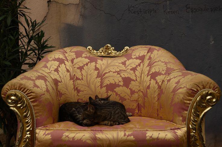 https://fromplacetospace.files.wordpress.com/2014/11/dsc_0114.jpg sleeping cats Cihangir Istanbul