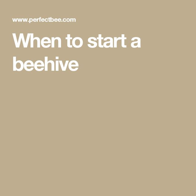 When to start a beehive