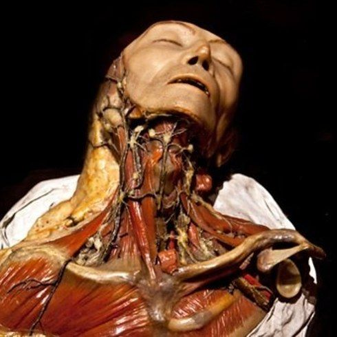 NEED TO GO HERE! The Mütter Museum — Philadelphia, Pa. | 13 Places Every Horror Story Lover Needs To Visit Before They Die