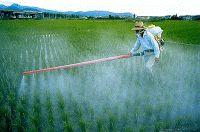 Pensieri & Parole: I pesticidi e l'ambiente