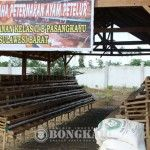 Warga Binaan Pemasyarakatan Diajak Ternak Ayam Petelur