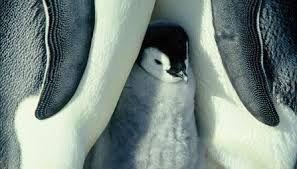 Afbeeldingsresultaat voor grappige pinguins