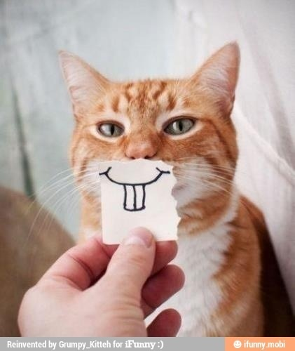 Smiling kitty :D