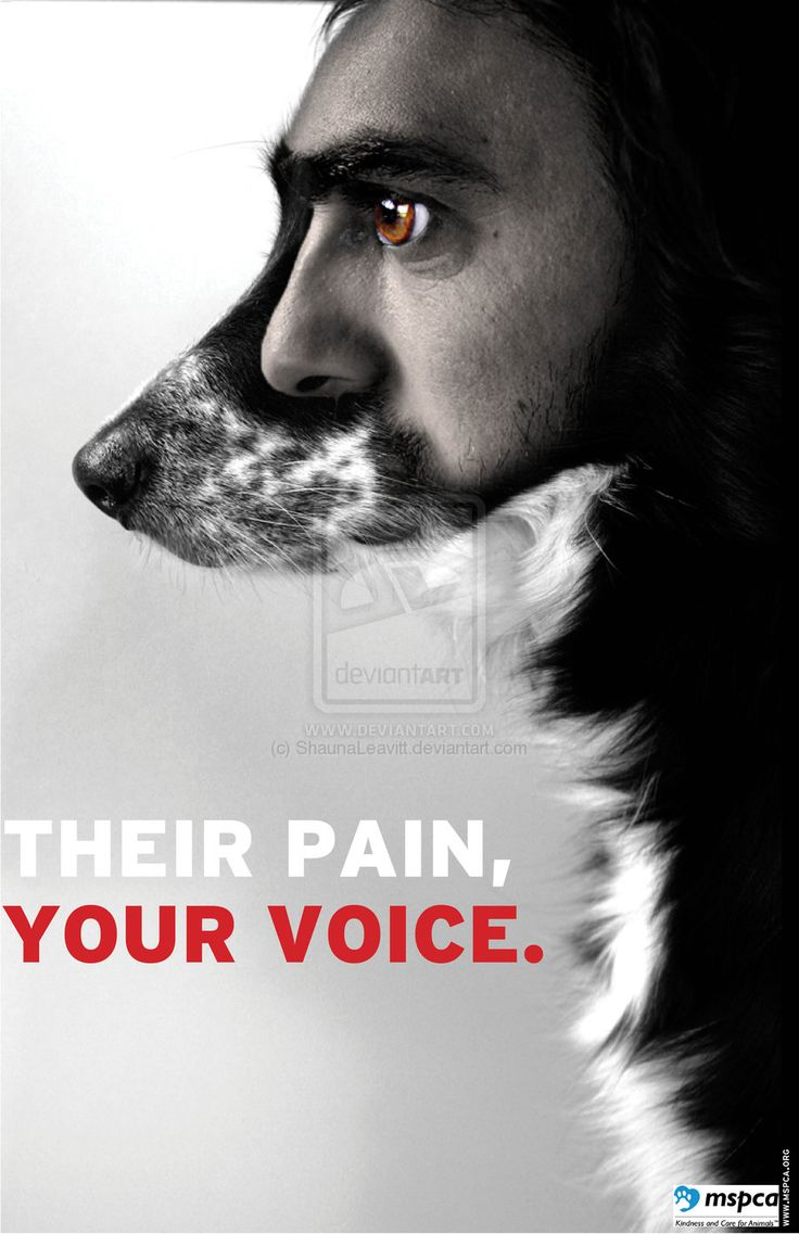 best animal rights images animal rescue  animal rights poster 1 by shaunaleavitt on double exposure is rly beautiful these photos are intended to create awareness of animal abuse and