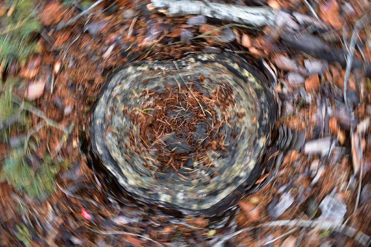 Kruh Strom Pařez Les