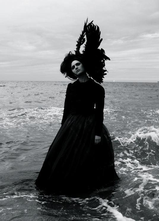 sea bird black