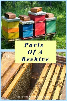 Beekeepers need to understand the name and function of all the parts of a beehive. Each hive part serves a special purpose. Know how to use each hive part. via @https://www.pinterest.com/carolinahoneyb