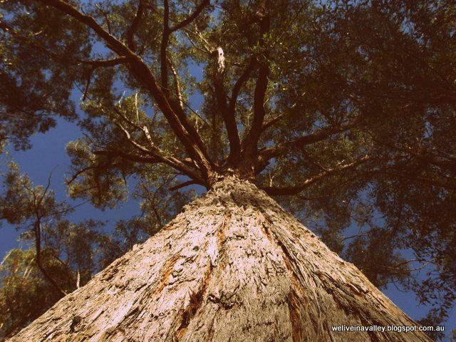 Australian bush home education science forest