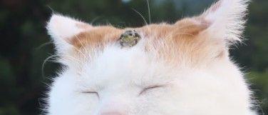 Daily Cute: Kikker chillt op kop van een slaperige kat | Flabber