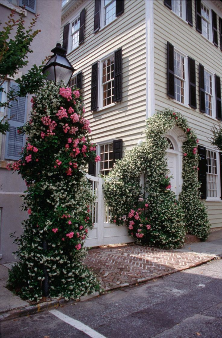 cherokee roses and confederate jasmine in historic Charleston