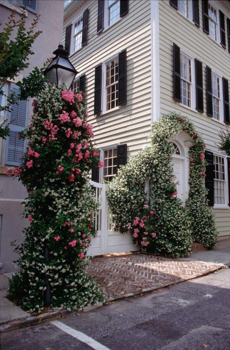 cherokee roses and confederate jasmine in historic Charleston