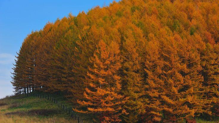 WpNature.com - Autumn Forest Blue Sky Nature Jesie Lesie Desktop Background Images