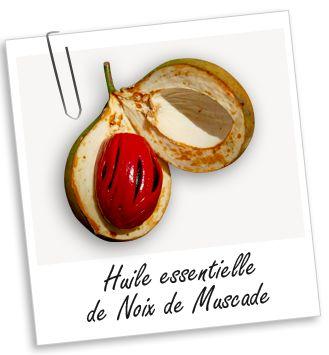 Huile essentielle Muscade noix Aroma-Zone