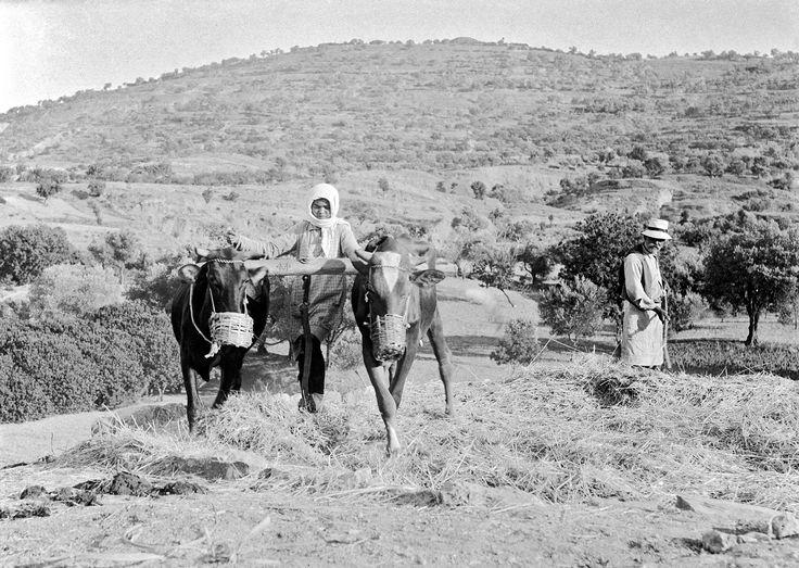 Χίος 1912-1928 φωτογραφία Περικλής Παπαπχατζηδάκης.