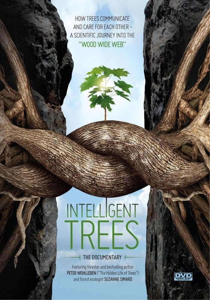 Connected at our cores indeed! Trees teach us that in a profound way. Read this blog by clicking on the link. A beautiful, interesting movie with a very poignant message.