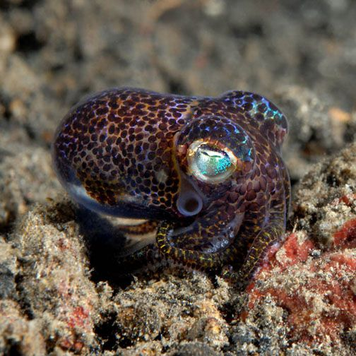 1000+ images about Aquarium & Sea Life on Pinterest ...