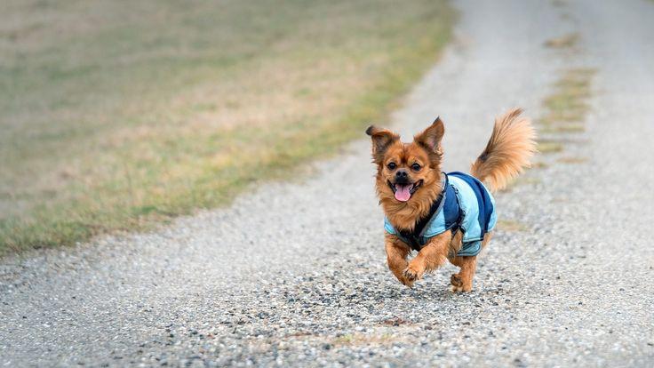perro, amigo, compañero, mascota, carrera, contento, 1703091359
