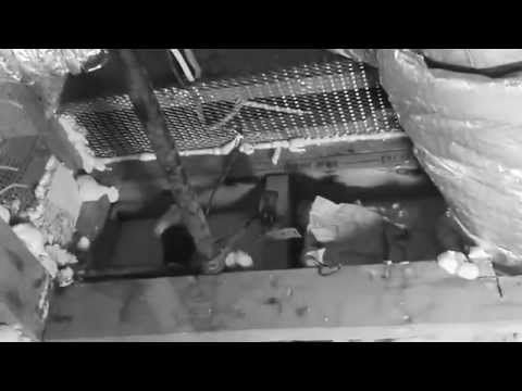 How To Get Rid Of Rats Forever and Protect Your House From Roof Rats coming back. - YouTube