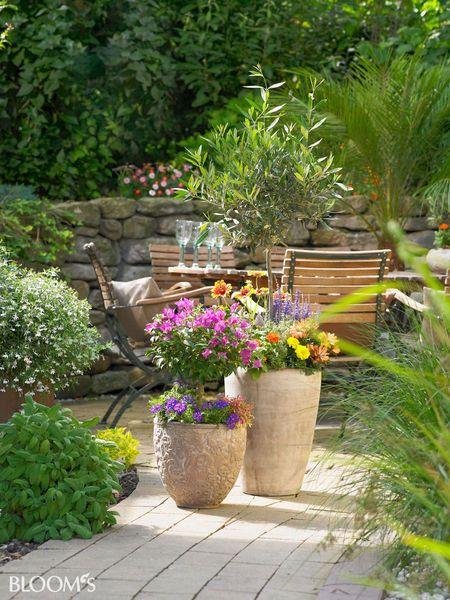 mediterrane terrassenbepflanzung the outdoor room pinterest. Black Bedroom Furniture Sets. Home Design Ideas