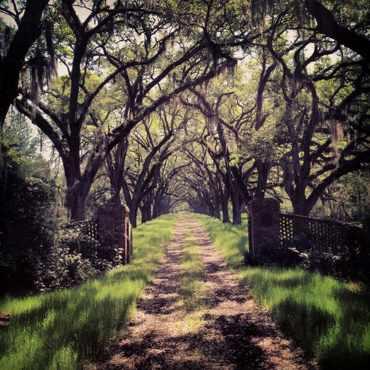 Charleston SC: Paths Lets Travel, Dreams Home, Charleston Sc, Southern Gothic, Driveways Entrance, Dreams House, Trees, Places, Roads