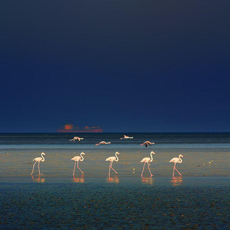Flamingo Fashion Show | Flickr - Photo Sharing!