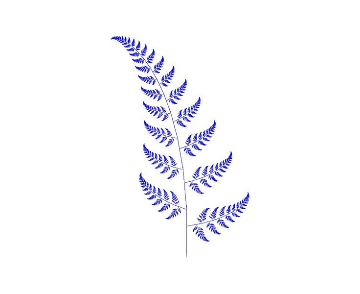 NZ fern drawing - Google Search