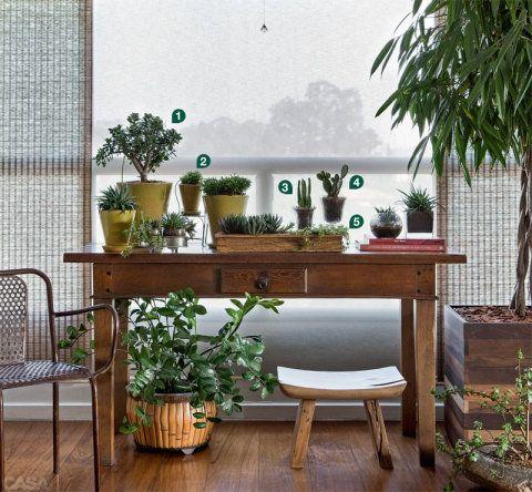 1. Planta jade (Crassula ovata)2. Ripsális (Rhipsalis cereuscula)3. Castelo-de-fada (Acanthocereus tetragonus)4. Orelha-de-coelho (Opuntia microdasys)5. Portulacaria (Portulacaria afra red stem)6. Zamioculca (Zamioculcas zamiifolia)