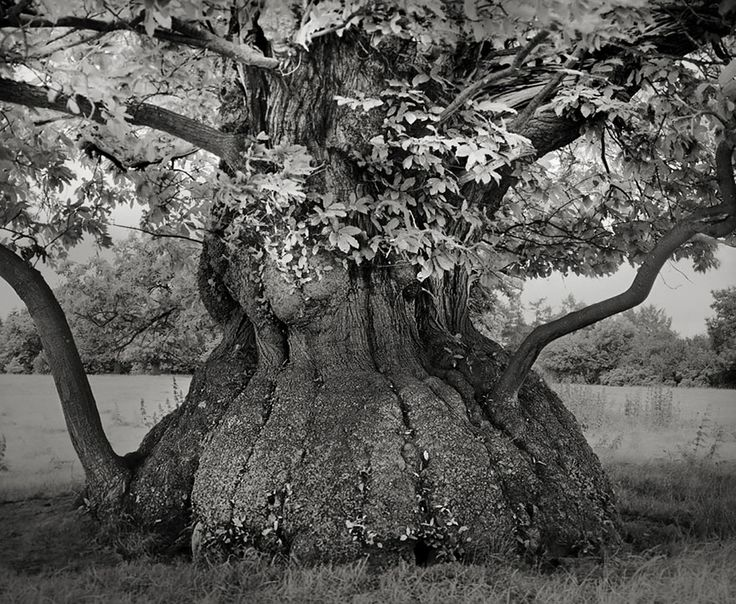 Sono oltre 14 anni che Beth Moon, fotografa di San Francisco, va alla ricerca degli alberi più antichi del mondo. Ha attraversato tutto il globo pur di immortalare la magnificenza di alberi antichi quanto la terra stessa, nelle sue località più remote.