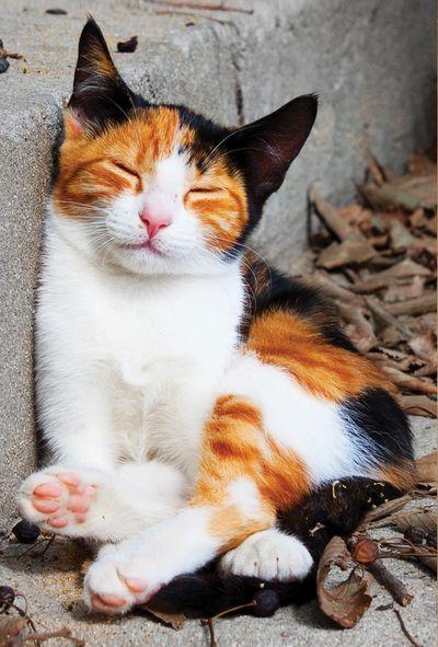 Śpiący trikolorek