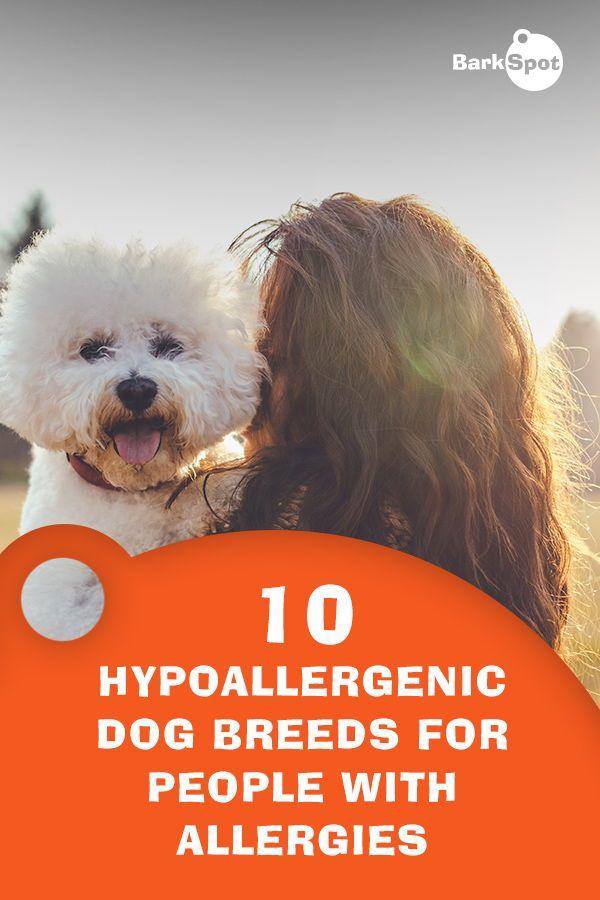 Barkspot Simplifing Pup Parenting Hypoallergenic Dog Breed Dog Breeds Best Hypoallergenic Dogs