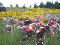 Découvrez le réseau des Ambassadeurs Causses et Cévennes UNESCO sur http://www.causses-aigoual-cevennes.org/tourisme/a-savoir/causses-cevennes-unesco/