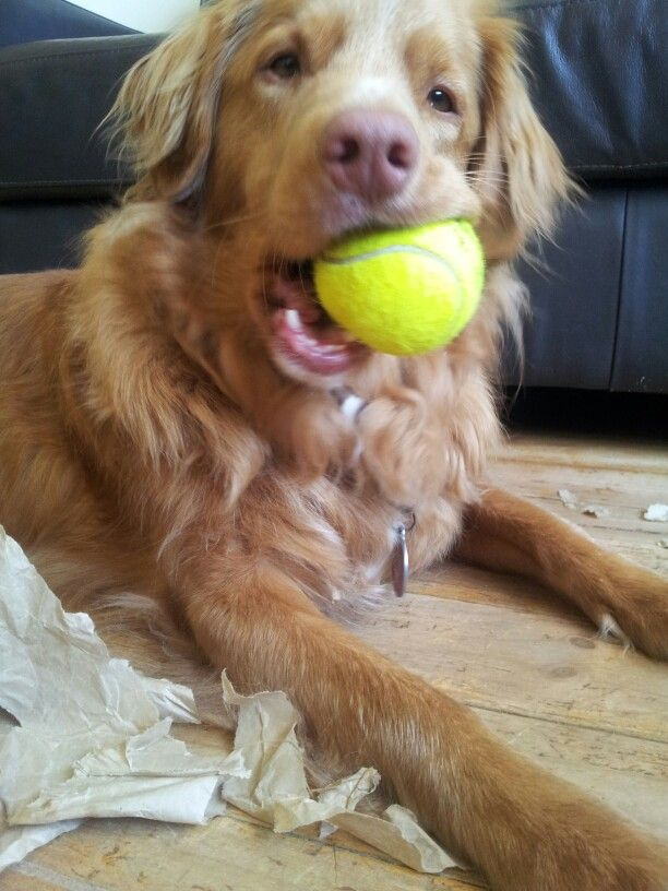 Archer loves his ball