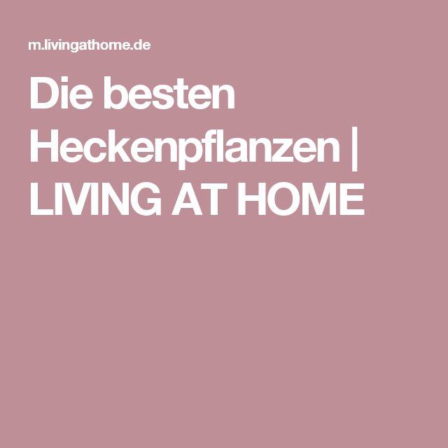 25+ melhores ideias de Heckenpflanzen no Pinterest Hedges jarda - heckenpflanzen