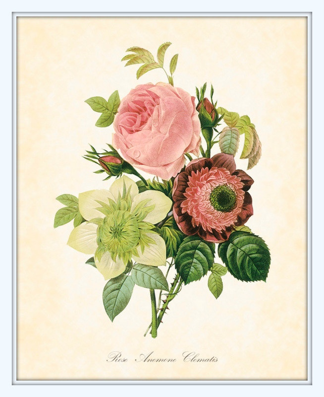 Antique French Botanical Art Print Rose, Anemone And