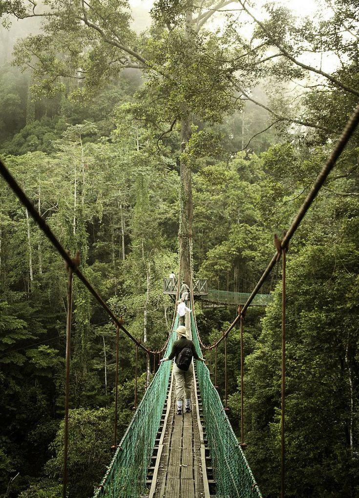 Canopy walkway, Borneo rainforest, Malaysia C.Day30
