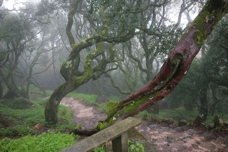 Bussaco Forest, Coimbra, Beiras, Portugal  -- Bussaco forest is like an enchante...