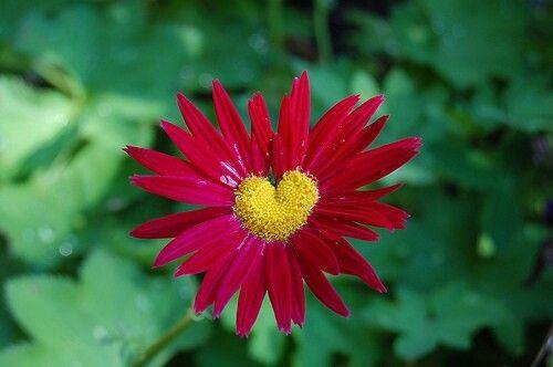 Une fleur dans le coeur..❤