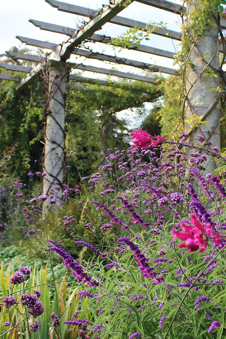 Gorgeous colours around the West Dean Gardens Pergola in October